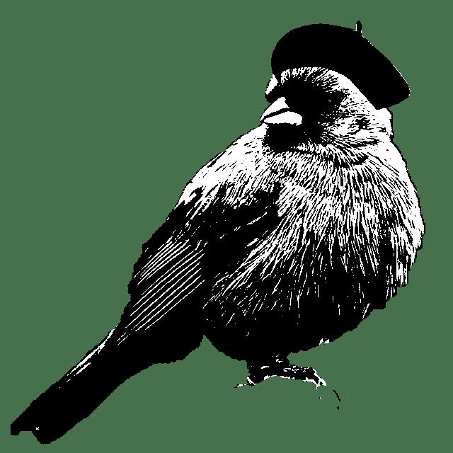 artist birdy