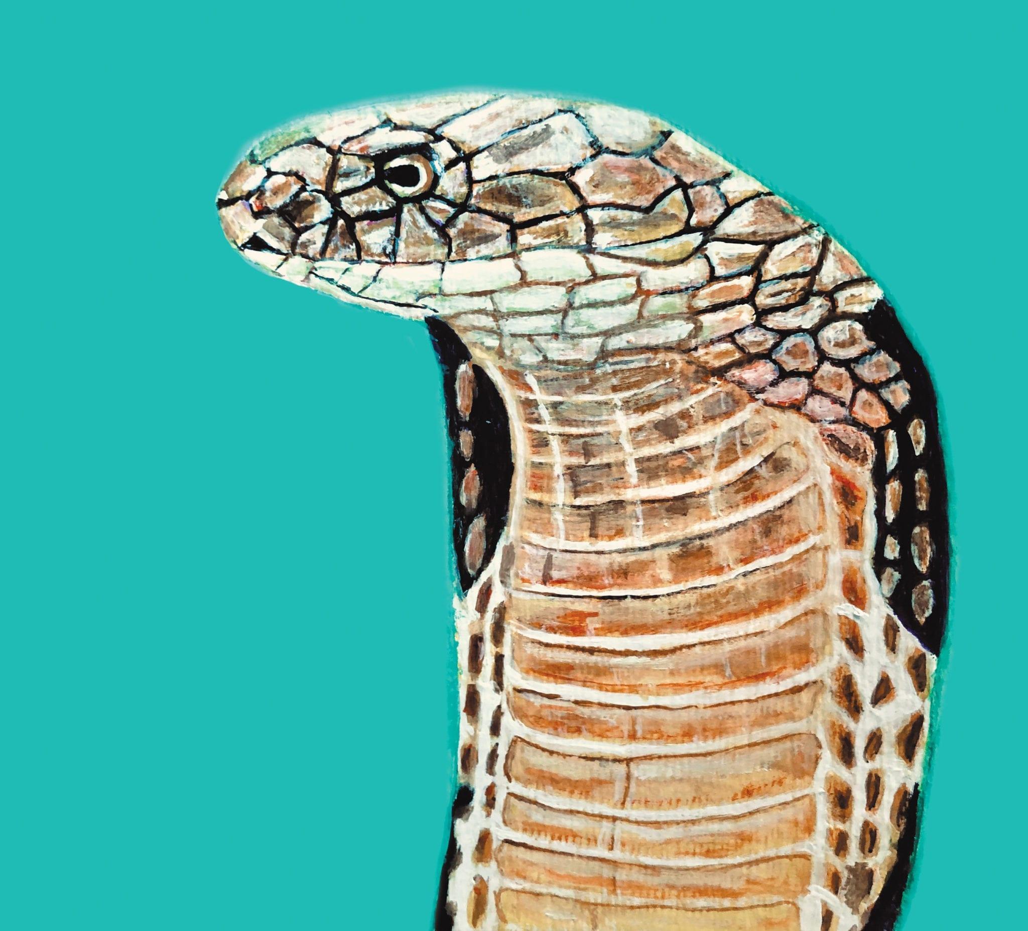 Cobra by Jonny DeStefano