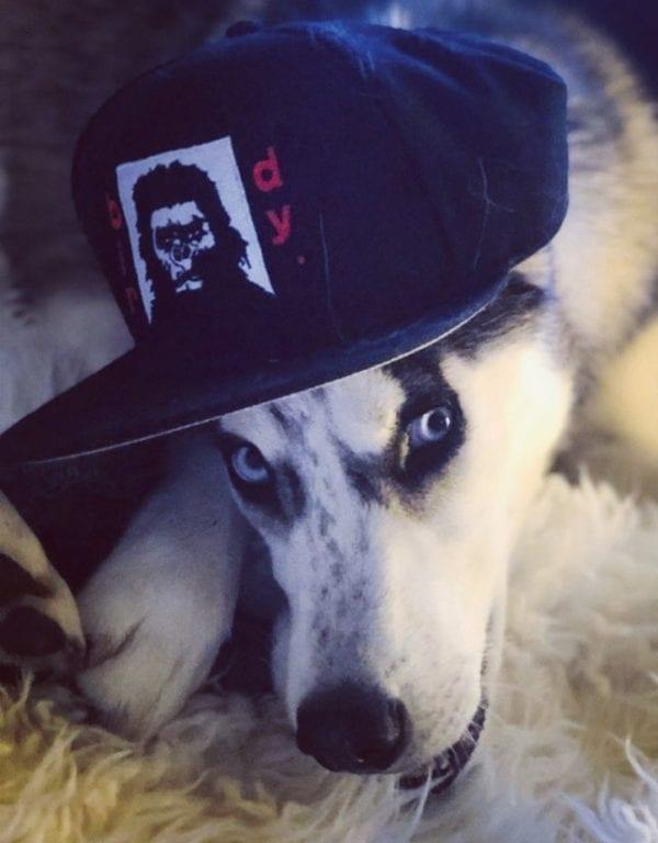 Husky in ball cap
