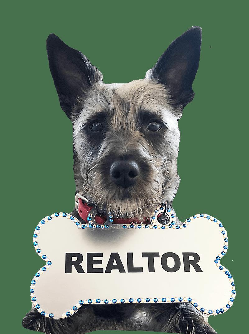 Denver Real Estate Professionals